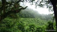Dichter Regenwald auf dem Weg nach Huamuaca