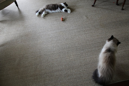 The carpet is finally dog hair free, now, we cats can stretch out and take a nice long nap without sneezing!