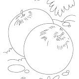 plum-coloring-page-1.jpg