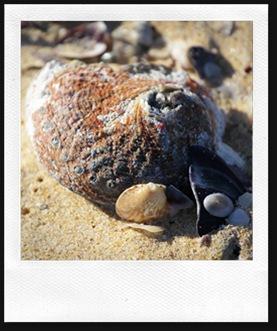 shell14