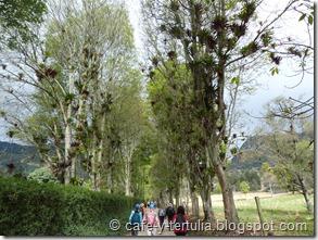 Bosque de bromelias