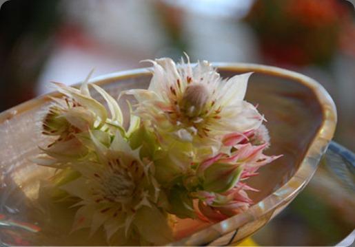 image8 podz florist