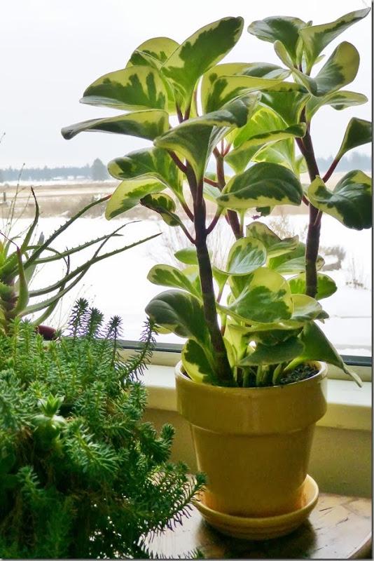 plants 017
