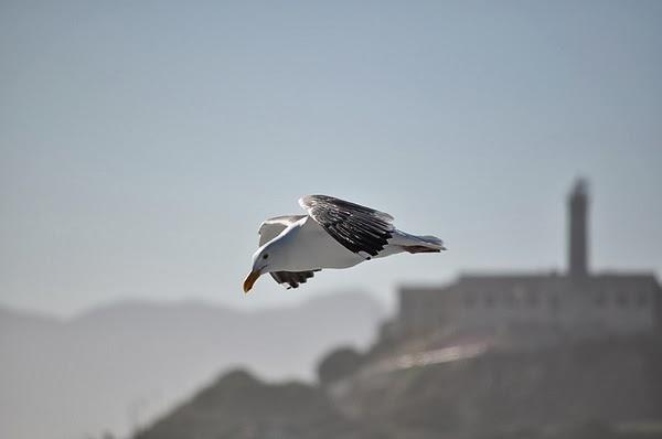 自由飛翔的海鷗