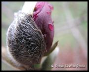 bud shell