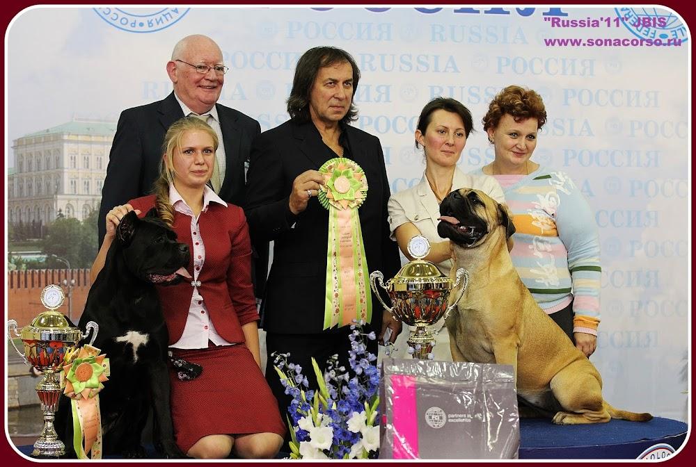 кане корсо выставка Россия 11 фото бест