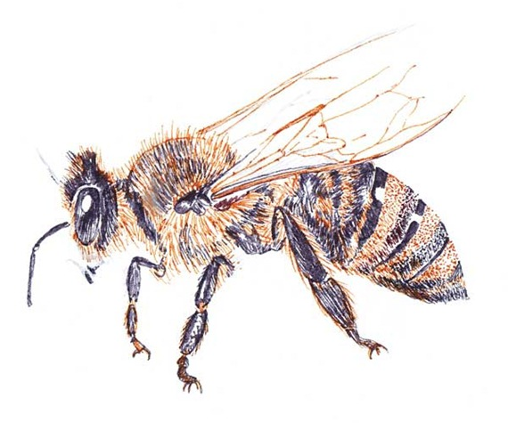 honey-bee-before-blog