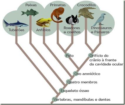 árvore filogénetica - exemplo