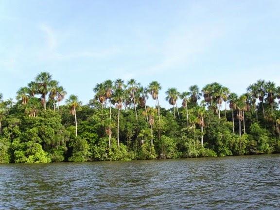 Floresta Nacional de Caxiuanã, Melgaço - Parà