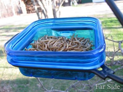 The dehydrated meal worms