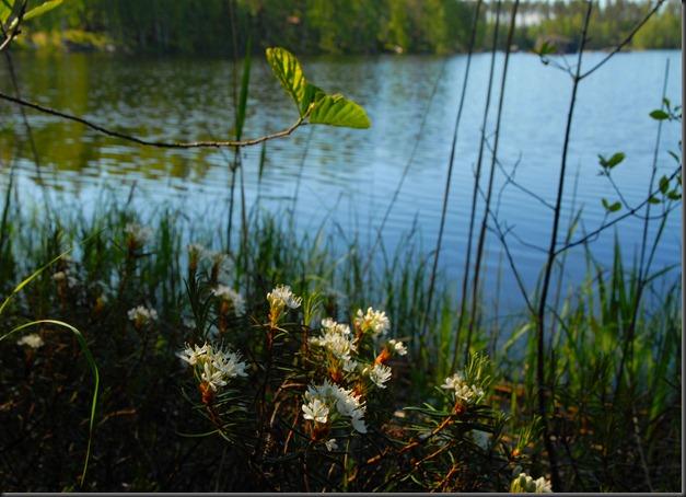 haukijärvi sudenkorento 071