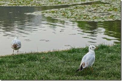 KunMing Green Lake 昆明。翠湖