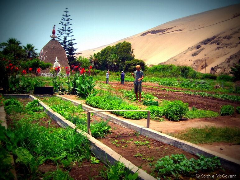 wwoof peru