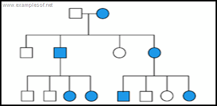 pedigree chart Sex linked dominant disorder