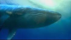 46 la baleine