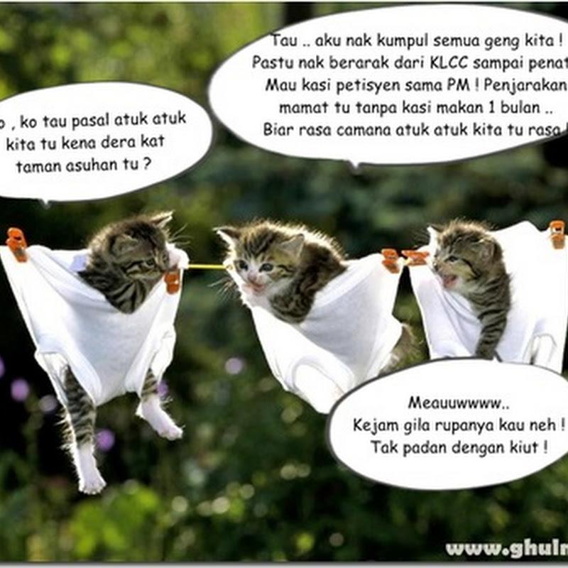 Kes dera kucing mendapat liputan meluas !