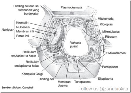 Struktur Sel Eukariotik