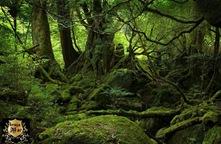 BosquesSudamericanos-debrujamar-0703