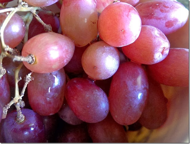 grapes-public-domain-pictures-1 (2309)