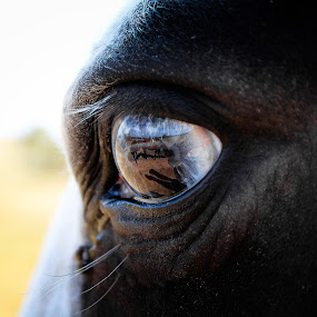 reflections by Jordiie Hunt - Animals Horses