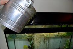 thirsty fish