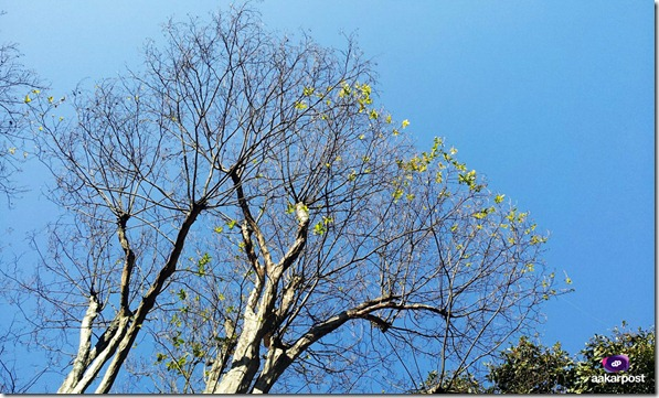 Blue-Sky-and-Trees-as-I-see-from-Garden-of-Dreams