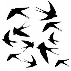 [swallows%255B2%255D.jpg]
