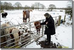 Brandon Lane  - Warwickshire - Snow