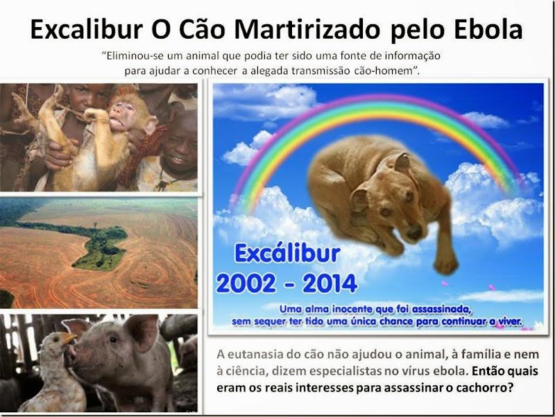 excalibur-o-cao-martirizado-ebola