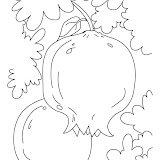 pomegranate-coloring-page-3.jpg