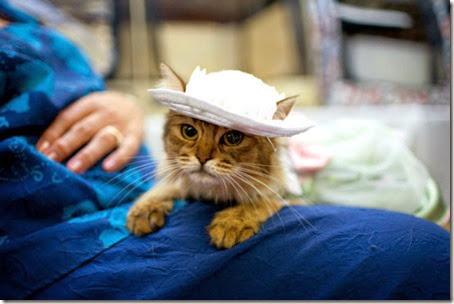 moda-gato-sombrero