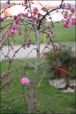 spring 2012 1580153