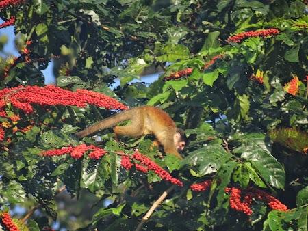 18. Maimuta veverita.JPG