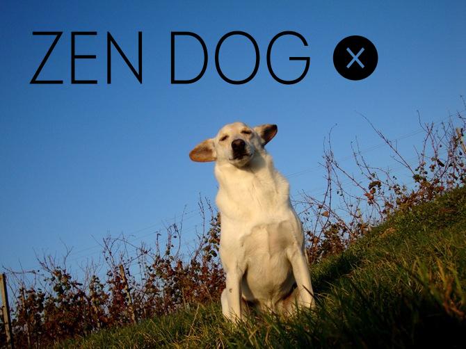 zen dog[2].jpg