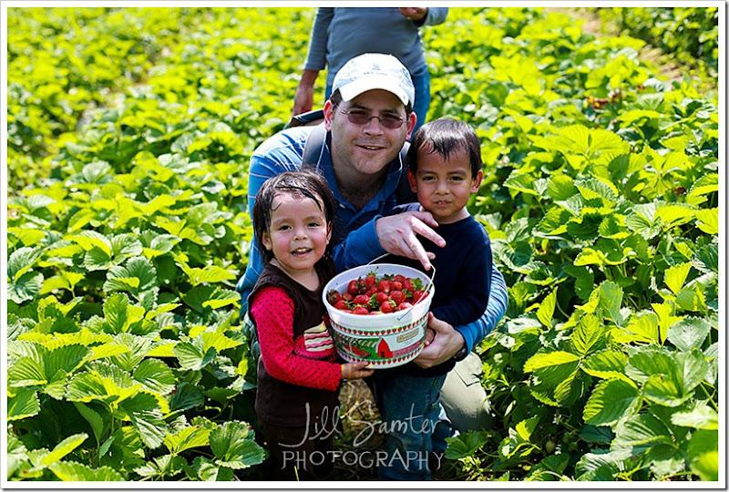 strawberryfields-5014
