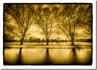Dan_Burkholder_Three_Trees_near_Water