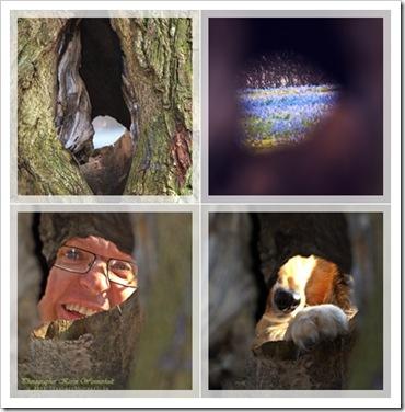 COLL4trädstamhål