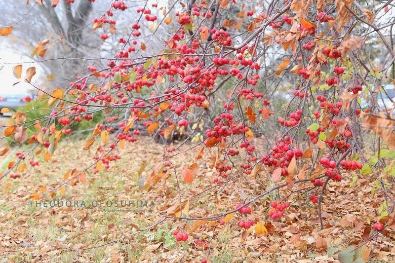 theodora ofosuhima autumn beauty