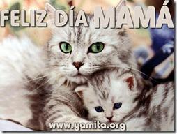 feliz dia de las madres (5)