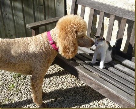 Lulu meets Daisy8