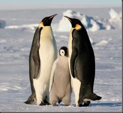 Amazing Pictures of Animals photo Nature exotic funny incredibel Zoo.Antartida (7)