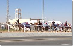 camel training
