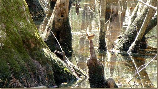 Beidler Forest_124