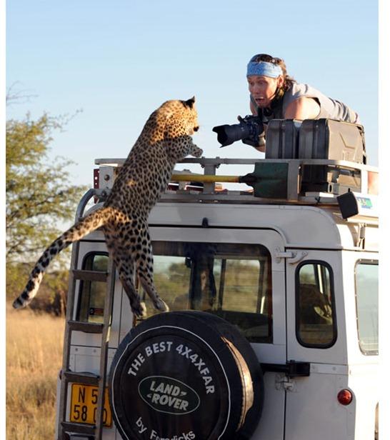 Leopard-suprise-je_1911911i