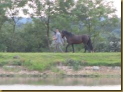 IMG_2005 Horse
