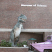 Boston Museum Sci Old TRex