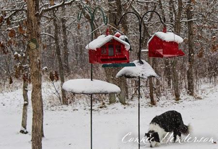 Snow November 5