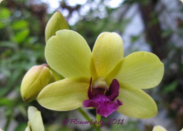 12-09-orchids2