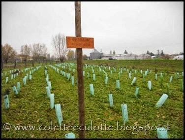 Progetto di forestazione urbana - Mille Alberi per Padulle