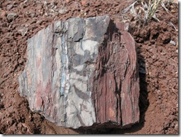 2012-04-15 Petrified Wood, Fry Canyon, UT (34)